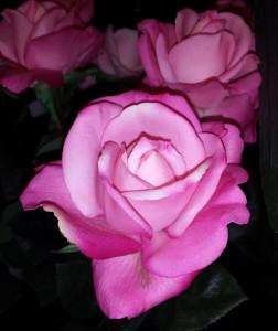 "Flower Placement ""Silks"""